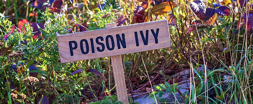 Who Is Allergic to Poison Ivy?